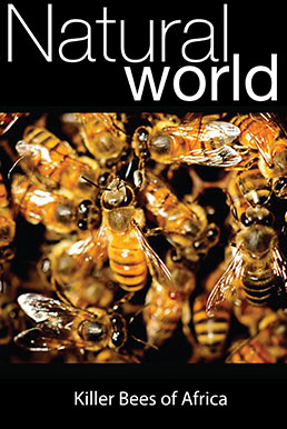 Natural World: Killer Bees of Africa