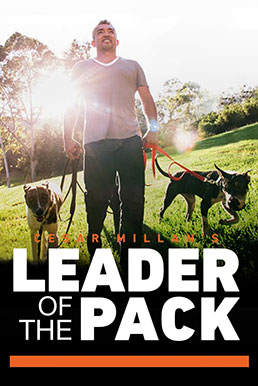 Cesar Milan's Leader of the Pack Trailer